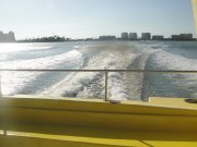 Amazing trip seeing dolphins jump out of the waves this awesome boat creates.