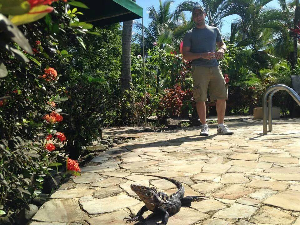 iguana, pool, tropical plants, joe, costa rica, quepos