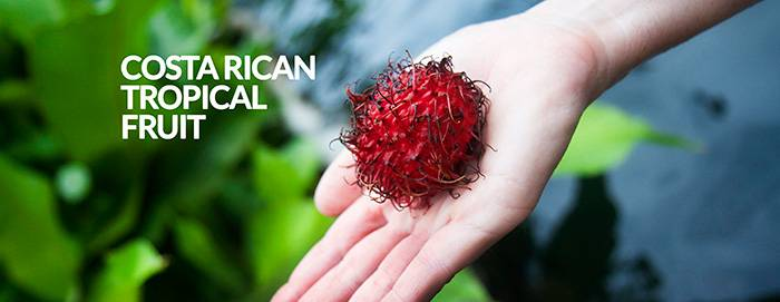 rambutan, costa rica, delicious fruit